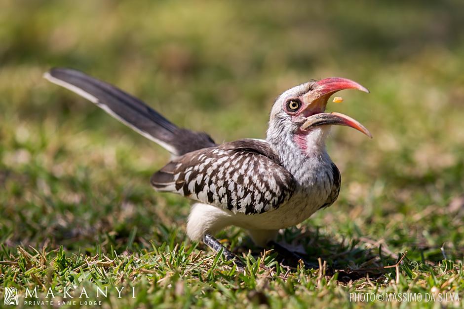 Hornbill Family
